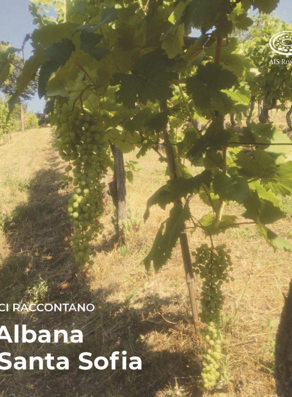 L'Albana a Santa Sofia